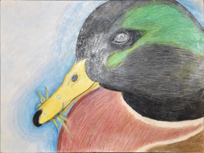 Drawing of a duck